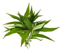 3 loại rau quen thuộc giúp thu nhỏ lỗ chân lông siêu tốc