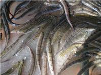 Đổi vị với cá kèo hấp rau răm