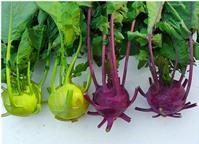 7 loại rau quả màu sắc lạ mắt hút khách hàng Việt