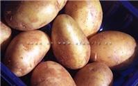 Cách chọn mua, bảo quản và chế biến khoai tây