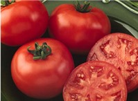 Cà chua: Thực phẩm hàng đầu trong thời kì mang thai