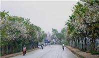 Du lịch Điện Biên – hẹn nhau mùa hoa ban