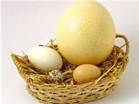 Ăn trứng ngỗng, đẻ con như ý?