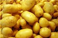 Khoai tây có dinh dưỡng cực kỳ cao