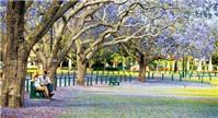 Cẩm nang du lịch Brisbane, Úc