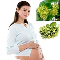 Bà bầu có nên ăn hoa thiên lý không?